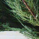 Evergreen Wreath Workshop: Dec. 17th